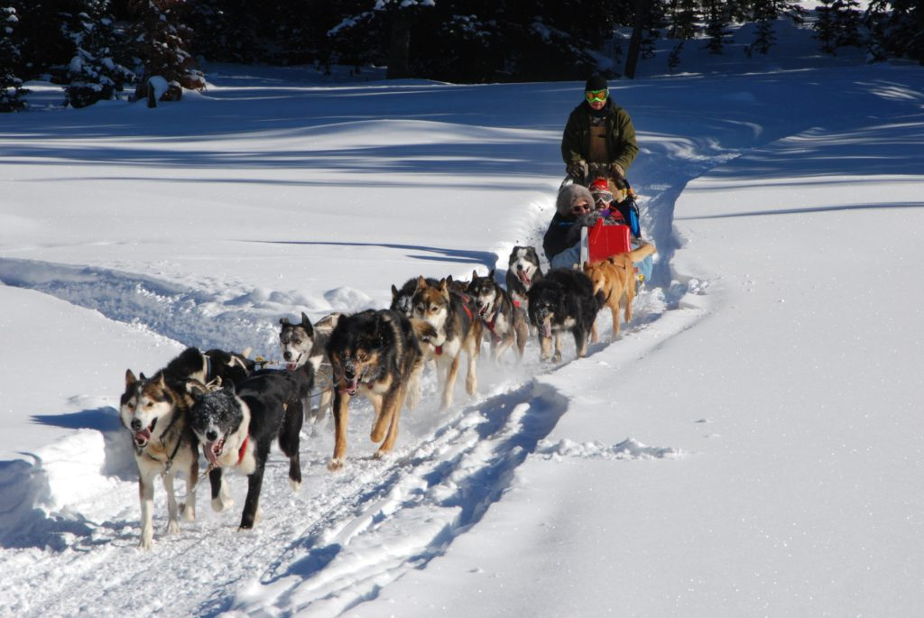 Dog sled in the mountains of the Dordogne Valley in the South West of France